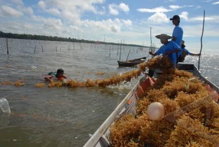 Nelayan rumput laut.